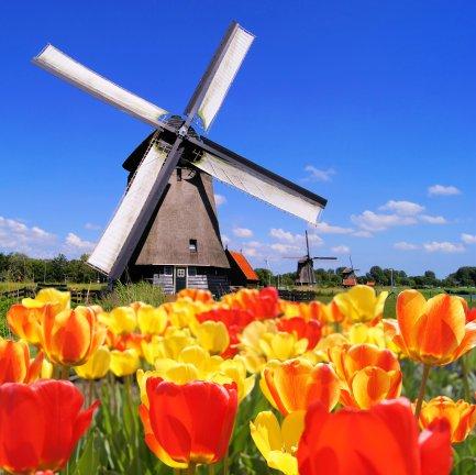 frolic-among-tulips-holland